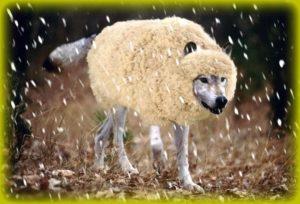 Lobo con piel de cordero Rehaz tu vida después de una relación tóxica